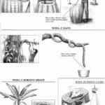 Woda z kaktusa, liany, korzeni, śniegu i lodu