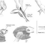 Filetowanie ryb