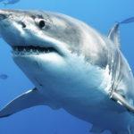 Ryby morskie niebezpieczne