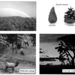 Przewidywanie pogody - obserwacja przyrody