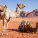 Środki transportu - zwierzęta